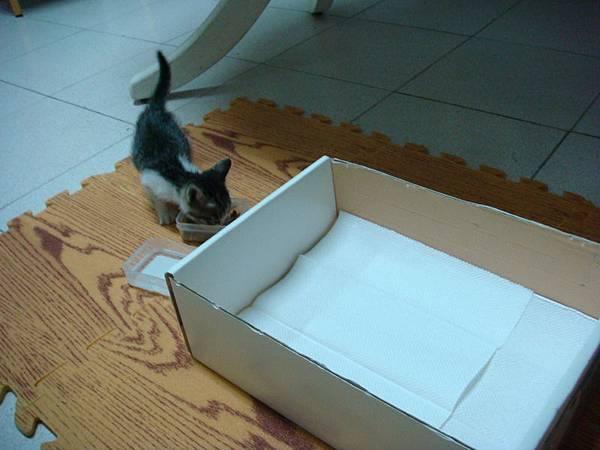 小奴婢睡紙箱就可以了