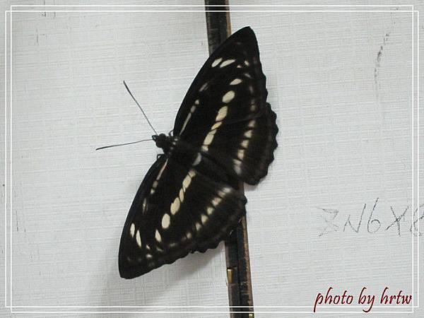 2011-07-01 003-1.jpg