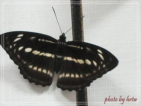 2011-07-01 005-1.jpg