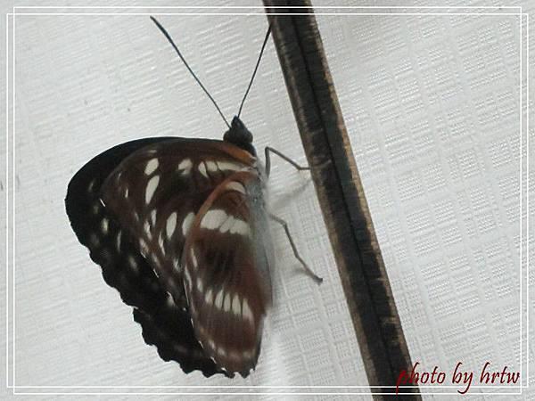 2011-07-01 007-1.jpg