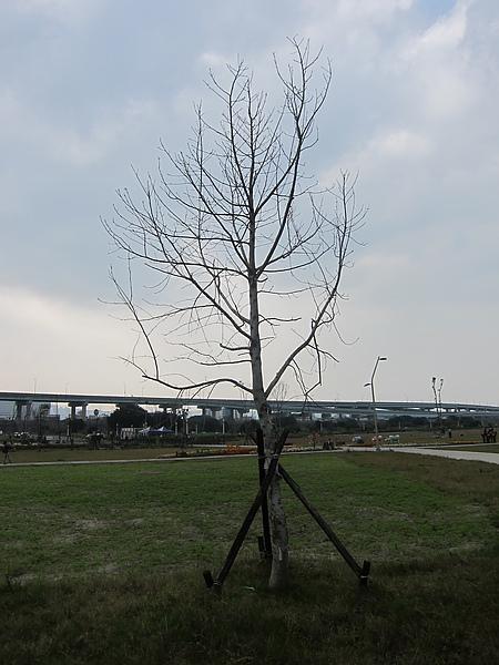 2011-2-10 022.jpg