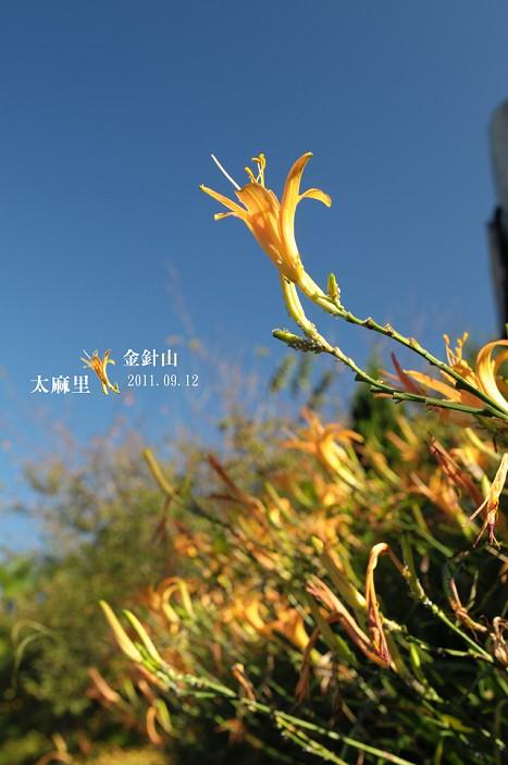 DSC_1884.jpg