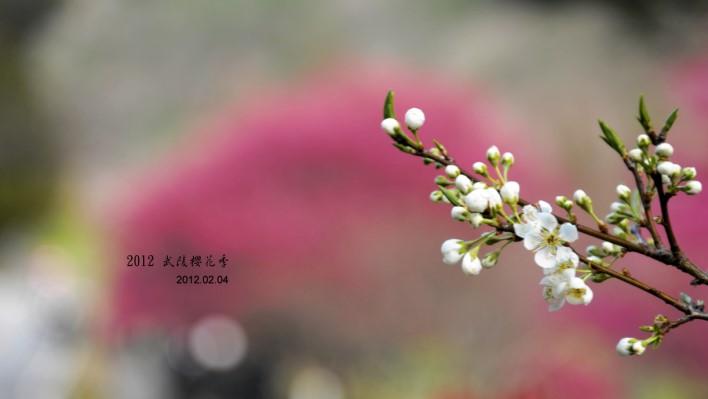 DSC_6626.jpg