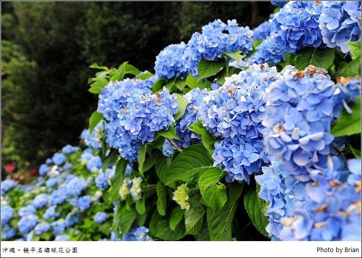 DSC_9309.jpg