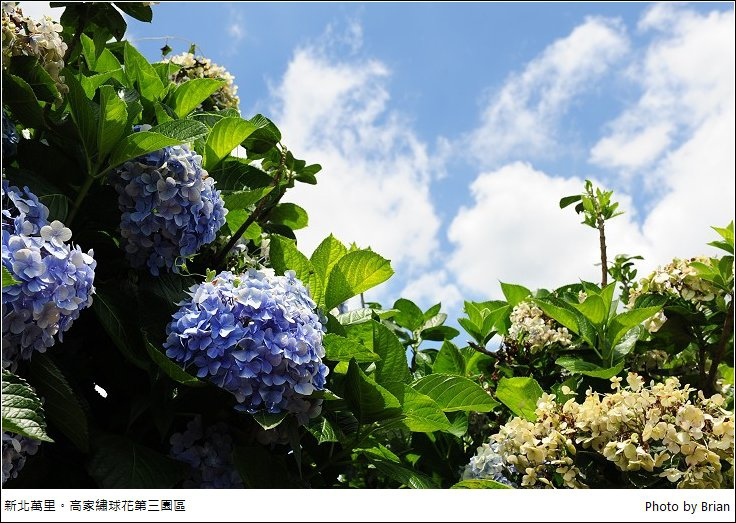 DSC_7729.jpg
