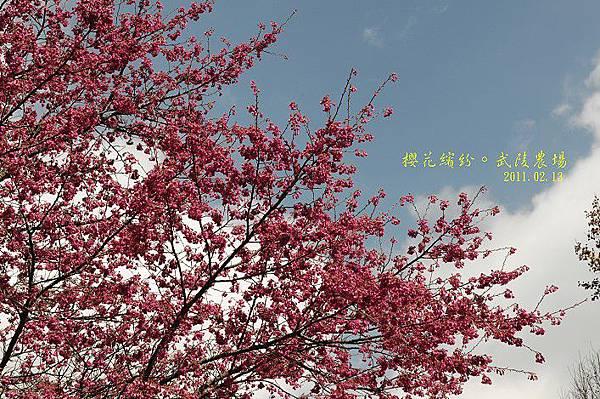 DSC_6362.jpg