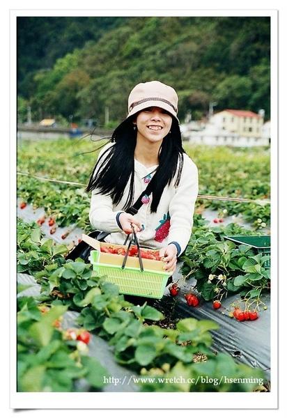 草莓姑娘愛咪