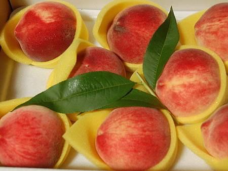 梨山水蜜桃盛產期皮薄肉厚、汁多味甜