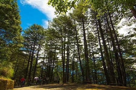 大雪山國家森林遊樂區森林浴步道