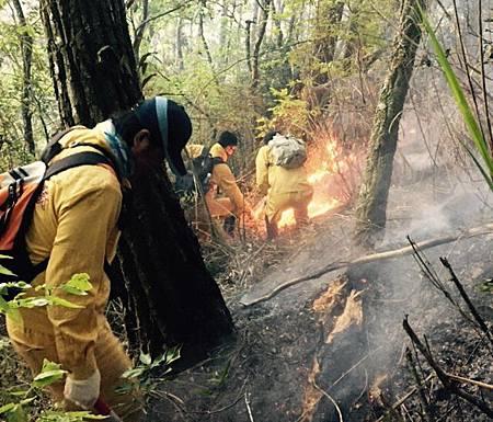 森林救火隊員當山羊保姆從火場救出小山羊