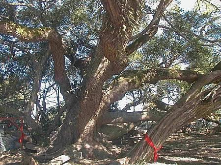 農業局推人樹共存觀念歡迎認養受保護樹木