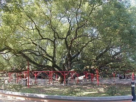 N五福神木