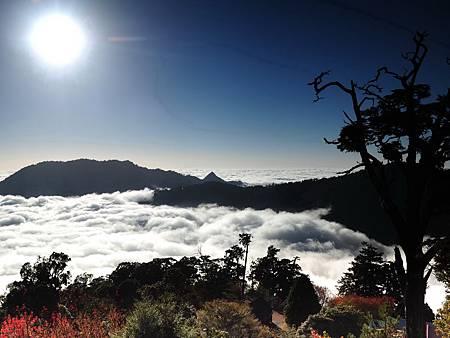 T大雪山雲海