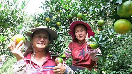 具足專業知識不走冤枉路當農夫也可賺錢