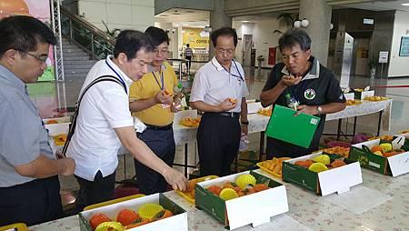 甜柿果品評鑑2