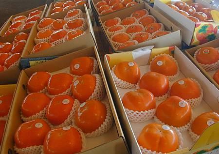 市府率團赴上海參加精品水果節