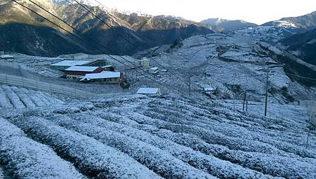 寒流低溫持續盤查農災