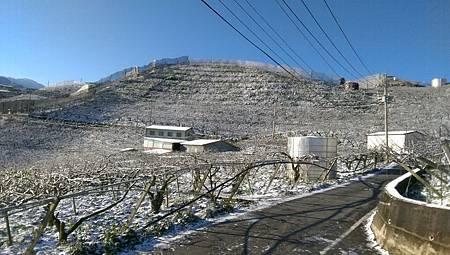 梨山雪災害1