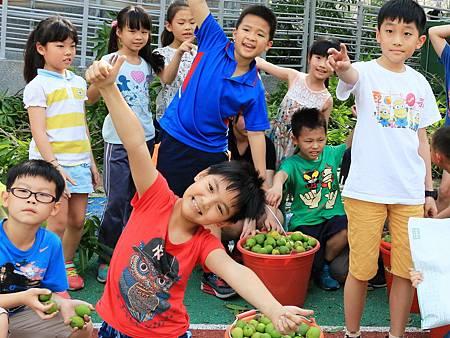 吃芒果青護紫斑蝶傳遞生命愛與關懷