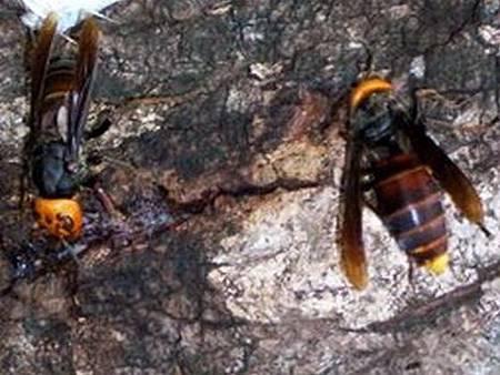 夏季蜂類蛇類活動頻繁