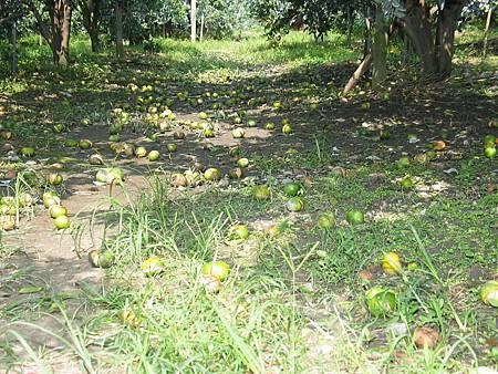梅姬颱風農業災害救助即日起受理申請