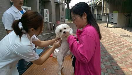 寵物疫苗巡迴注射