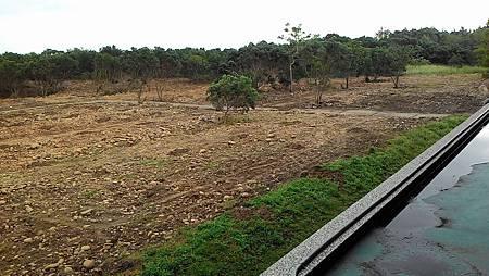 公墓蛻變森林化