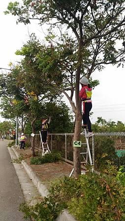 修剪樹木1