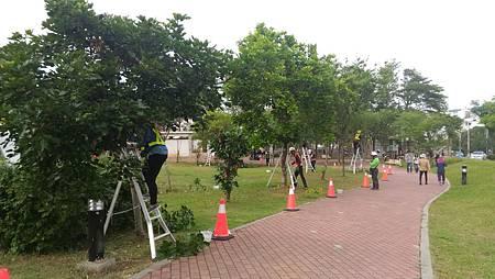 中市樹木修剪證照制度錄取率52%
