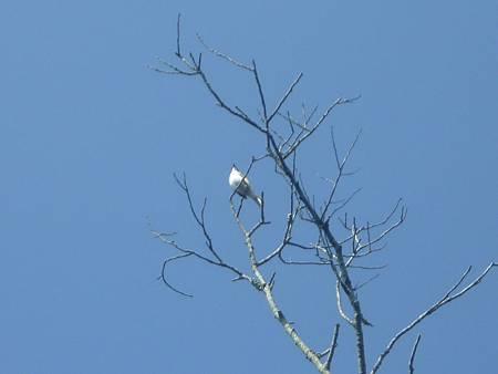 防禽流感賞鳥應與野鳥保持安全距離