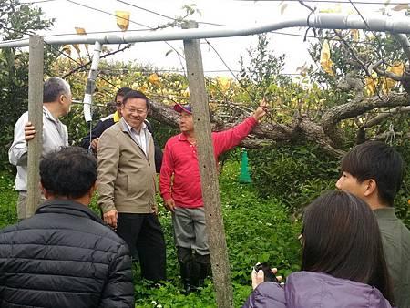 H國產梨穗1.jpg