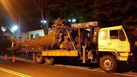 挖掘老樹2B.jpg