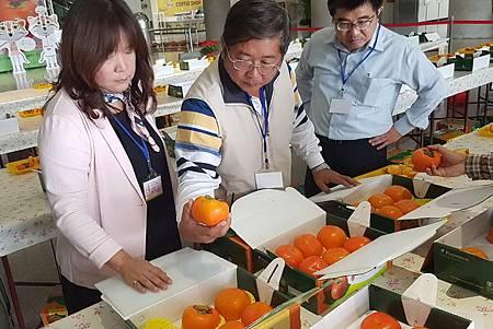 H甜柿評鑑2.jpg