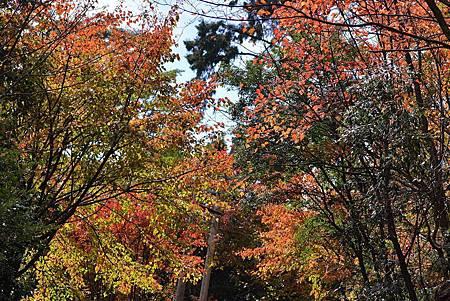 H大雪山楓紅1.jpg