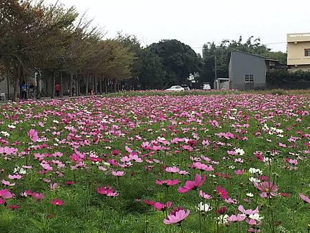 H神岡社南花海2.jpg