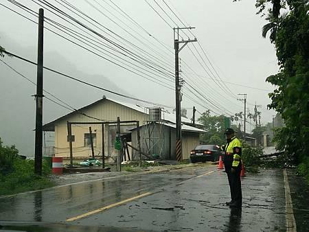 颱風樹倒3.jpg