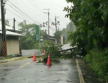 颱風樹倒5.jpg
