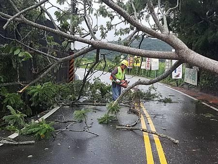 H颱風樹倒4.jpg