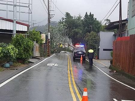 H颱風樹倒1.jpg