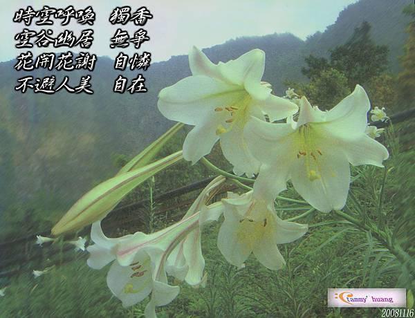 2008111602拷貝.jpg