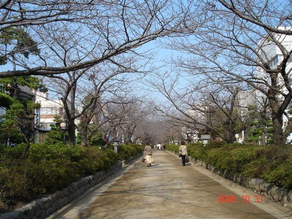 鎌倉若宮大路WAKAMIYA-OJI st.