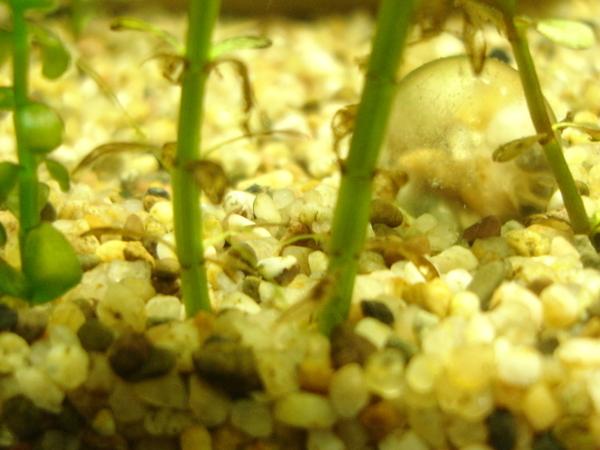 蝦寶寶18天大