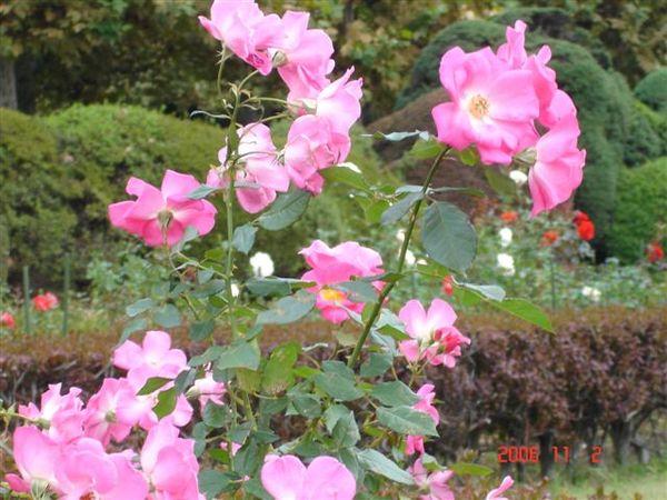 新宿御苑-整形式庭園