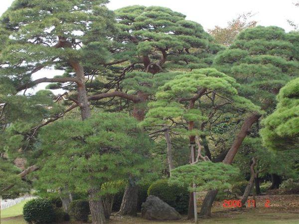 新宿御苑-日式庭園