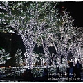 新宿南口廣場耶誕佈置