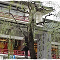 淺草Asakusa