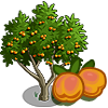 tree_apricot_icon.png