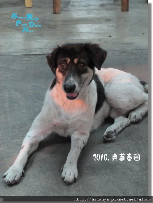P991120-小狗.JPG