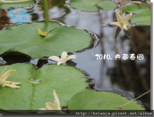P991117-典藏莊園-早 (21).JPG