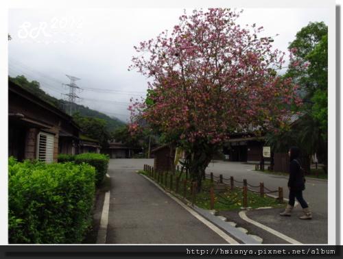 0310林田山 (9)